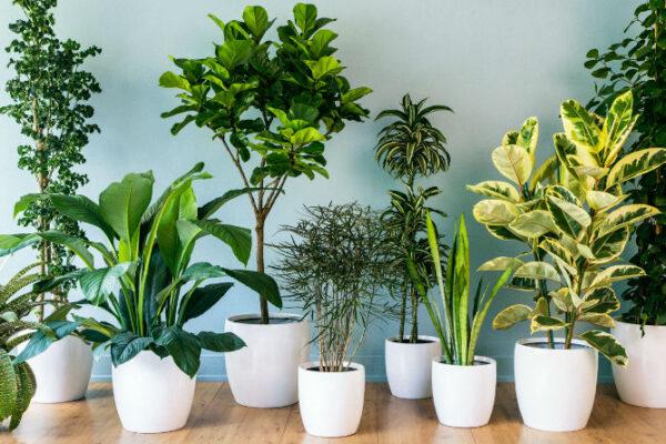 Lo que debes saber para comprar plantas de interior